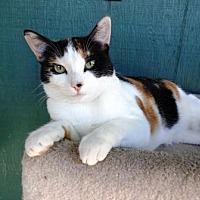 Adopt A Pet :: Cameo - Lathrop, CA
