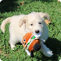 Adopt A Pet :: Lockley - San Diego, CA