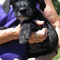Adopt A Pet :: MICK - Brookside, NJ