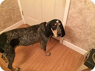 Coonhound Mix Dog for adoption in whiting, New Jersey - Sally