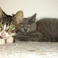Adopt A Pet :: Smokey and Bandit - Atlanta, GA