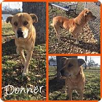 Adopt A Pet :: Donner - Alvarado, TX