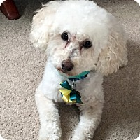 Adopt A Pet :: Beauregard - Farmington Hills, MI