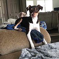 Adopt A Pet :: Sparky - Beaumont, TX