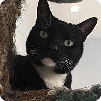 Adopt A Pet :: Jessica - Lafayette, NJ