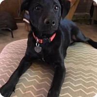 Adopt A Pet :: Emily - Little Rock, AR