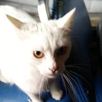Adopt A Pet :: Billy Jo - Caro, MI