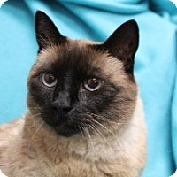 Adopt A Pet :: Justice - Modesto, CA