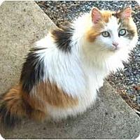 Adopt A Pet :: Hope - Crescent City, CA