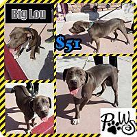 Adopt A Pet :: Big Lou - Fowler, CA