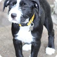 Adopt A Pet :: Elsie - Norwalk, CT