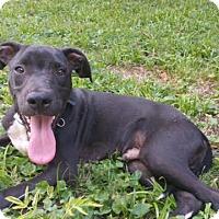 Adopt A Pet :: Barrow - PORTLAND, ME