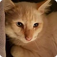 Adopt A Pet :: Saga - Ennis, TX