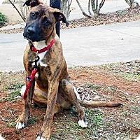 Adopt A Pet :: Luke - Lawrenceville, GA