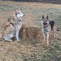 Adopt A Pet :: Sabre (an Rolo) - Harvard, IL