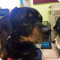 Adopt A Pet :: Jordan - Newburgh, IN