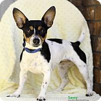 Adopt A Pet :: Sassy - Weatherford, TX