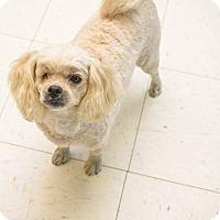 Adopt A Pet :: Arya - Pittsburg, KS