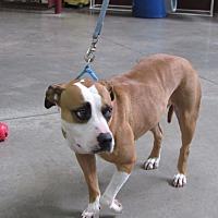 Adopt A Pet :: Tilly - Cameron, MO