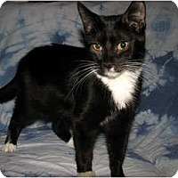 Adopt A Pet :: Moe - Norwich, NY