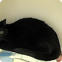 Adopt A Pet :: Tammy Faye - Ludington, MI