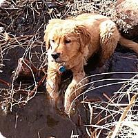 Adopt A Pet :: Wrigley - Denver, CO