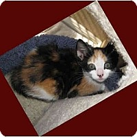 Adopt A Pet :: Cali - Modesto, CA