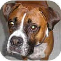 Adopt A Pet :: Buddy - Sunderland, MA