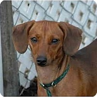 Adopt A Pet :: Carly - Ft. Myers, FL