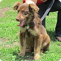 Adopt A Pet :: Scooter - Kingwood, TX