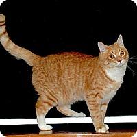Adopt A Pet :: Handsome Bailey - Sunderland, ON