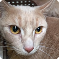 Adopt A Pet :: Lucy - Bedford, MA