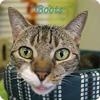 Adopt A Pet :: Boots - Winter Haven, FL