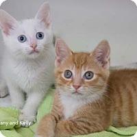 Adopt A Pet :: Kelly - Merrifield, VA