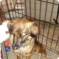 Adopt A Pet :: Nina - Simi Valley, CA