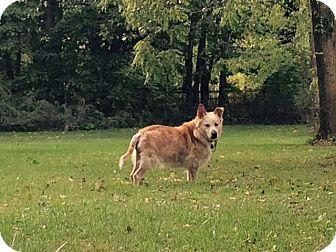 Golden Retriever Mix Dog for adoption in Sharon Center, Ohio - Fiona