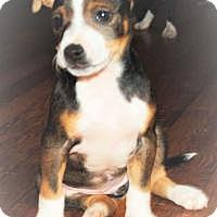 Adopt A Pet :: Sara - Marlton, NJ