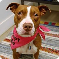 Adopt A Pet :: Sweetie - Wilmington, DE