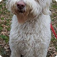 Adopt A Pet :: Murphy - Alpharetta, GA