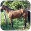 Photo 1 - Thoroughbred for adoption in Old Fort, North Carolina - This Cat Can Fly