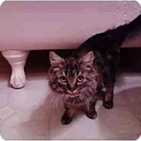 Adopt A Pet :: Coming Soon! Lucy - Erie, PA