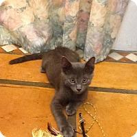Adopt A Pet :: Sam - Ft. Lauderdale, FL