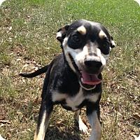 Adopt A Pet :: Boe - Lufkin, TX