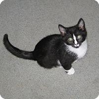 Adopt A Pet :: Happy - Kirkwood, DE