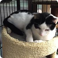 Adopt A Pet :: Sophie - Horsham, PA