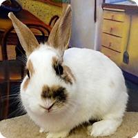Adopt A Pet :: Hemsworth - Foster, RI