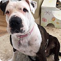 Adopt A Pet :: Grace - Minneola, FL