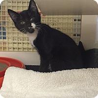 Adopt A Pet :: Jakoby - Stafford, VA