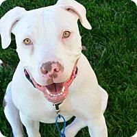 Adopt A Pet :: Adeline - Meridian, ID