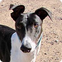 Adopt A Pet :: Bart - Tucson, AZ